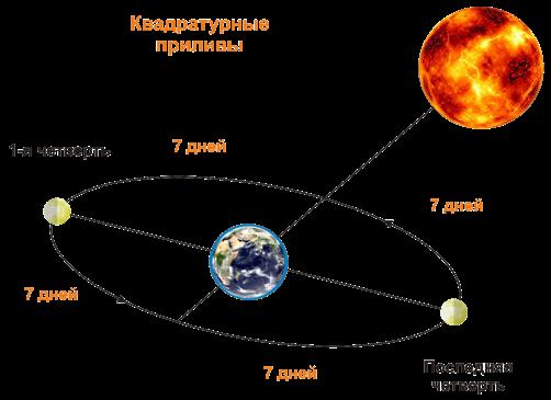 приливы в какой фазе луны